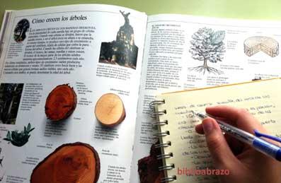 arboles-001